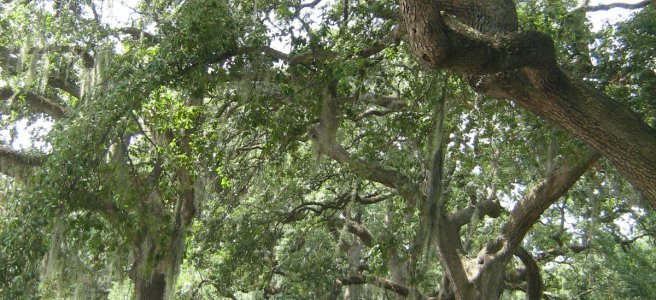 Photo of trees in the city of Savannah